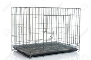 metal dog crate for dogs