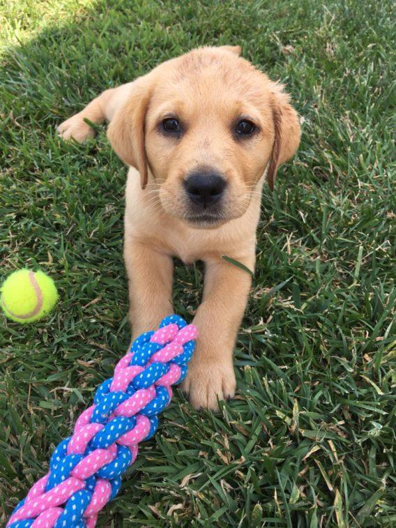 Dog Pet Store – Doggie Goodies
