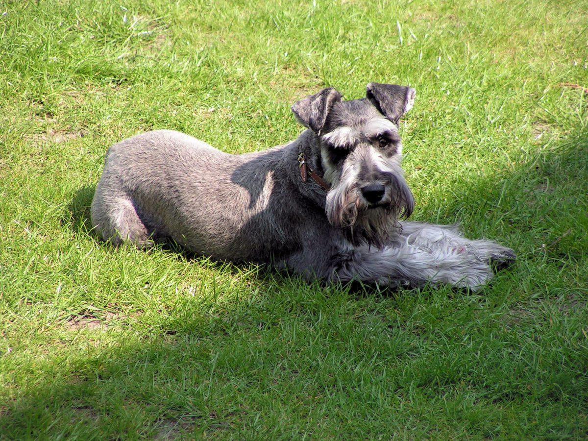 Basics of Dog training - Dog Training Tips