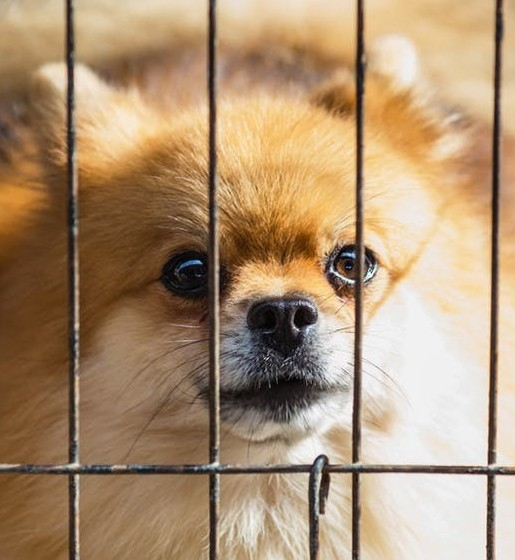 Fostering Pets – Saving Lives of Furry Friends!