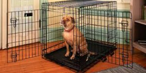 Metal Kennel - Medium to Extra Large Breeds