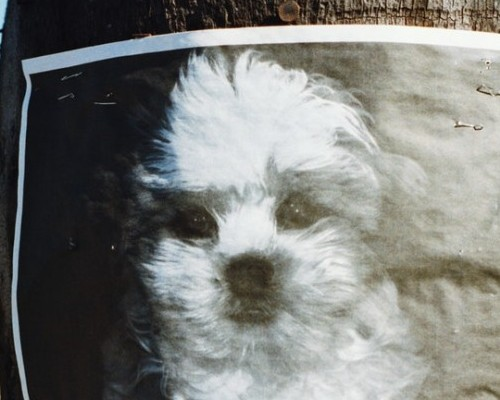 poster of lost doggie