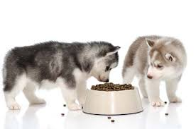 "Selection of Dog Foods ""What is Best"""