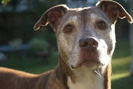 Caring For Older Dogs – Yes, our dogs age faster than us!
